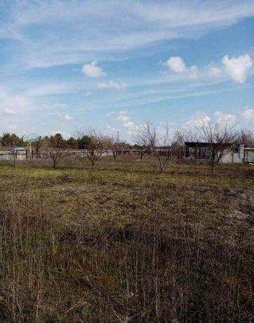 Участок (дача) в лесу  Нечаево