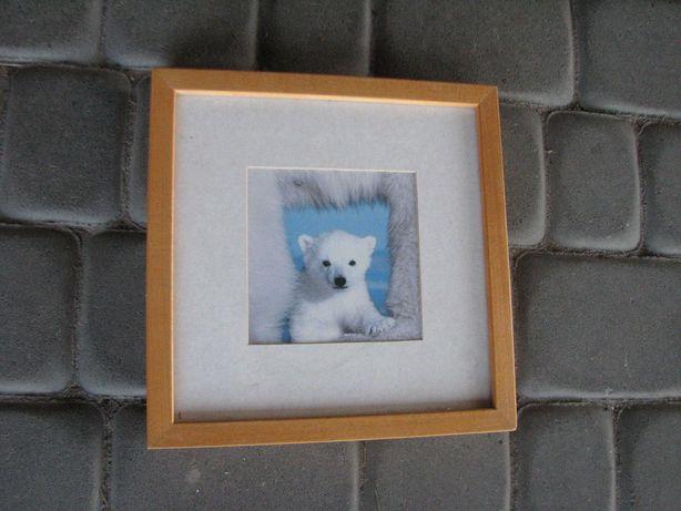obrazek niedźwiedź solidna szeroka drewniana rama szkło