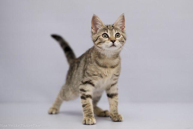 Очаровательный котенок, девочка