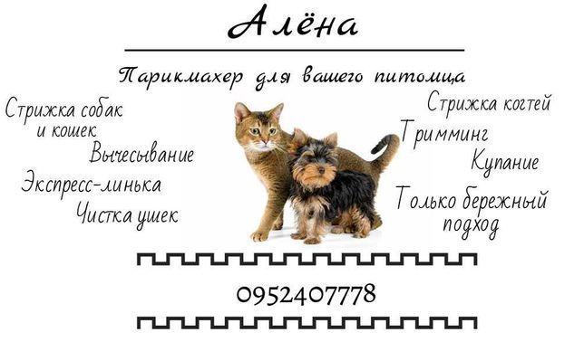Стрижка собак и кошек любых пород