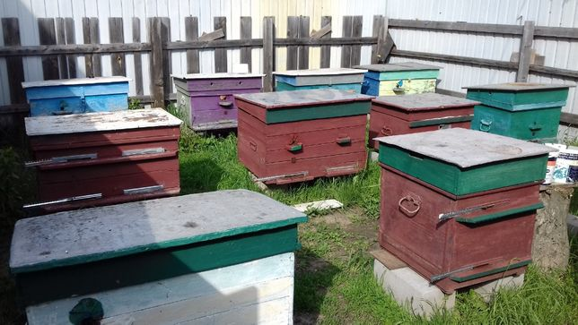 Продам пасику, пчелосемьи, улья для писики.