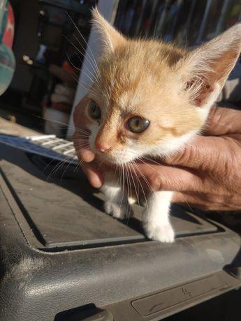 Oddam 3 małe kotki