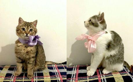 Котик и кошечка ищут любящих хозяев!(Мама - британка)