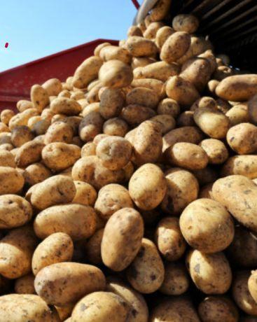 EKOLOGICZNE Ziemniaki z wlasnego gospodarstwa RECZNIE PRZEBIERANE