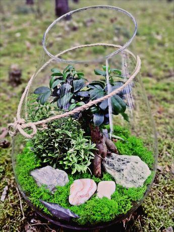Las w słoiku, dom, biuro, prezent, bonsai, paprotka, sukulenty