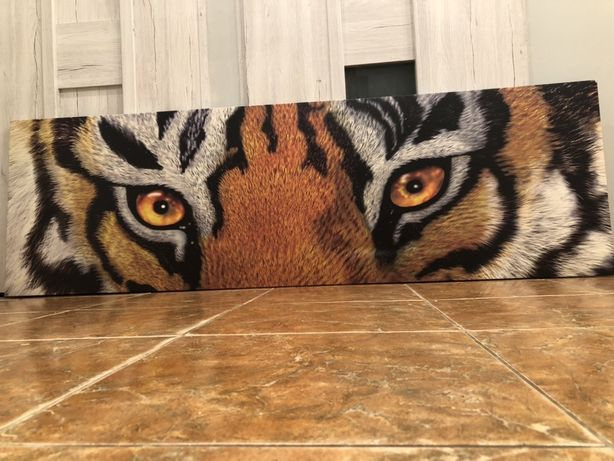 Duży fotoobraz-Oczy kota
