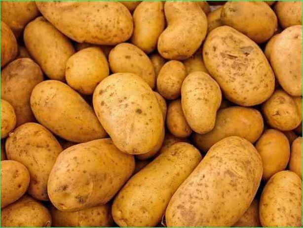 Картошка, картошка на посадку