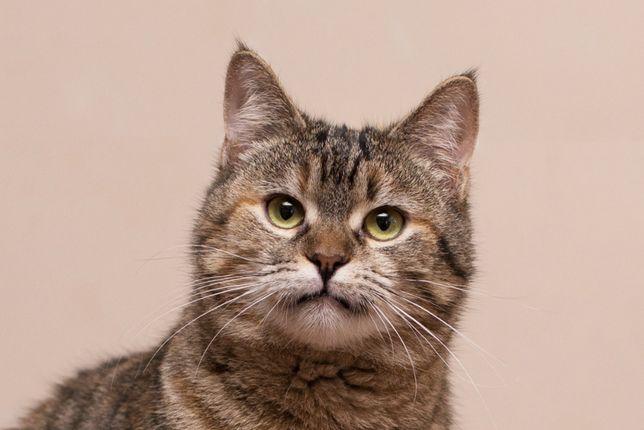 Отдам в хорошие руки молодую кошечку Рябинку.