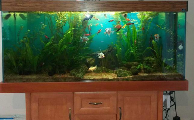 Akwarium kompletne (ryby, roślinność, sprzęt)