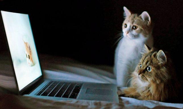 Компьютерный мастер ,Запорожье
