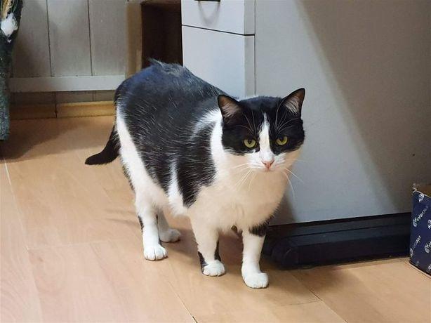 Kochana spokojna koteczka szuka domu