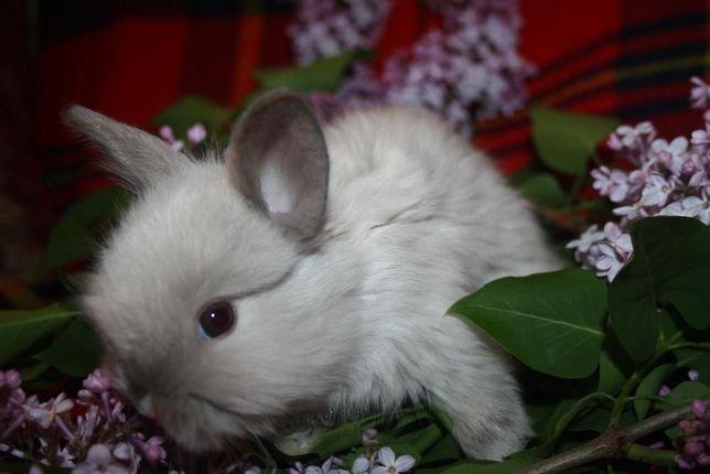 Лучшие карликовые крольчата в макеевке