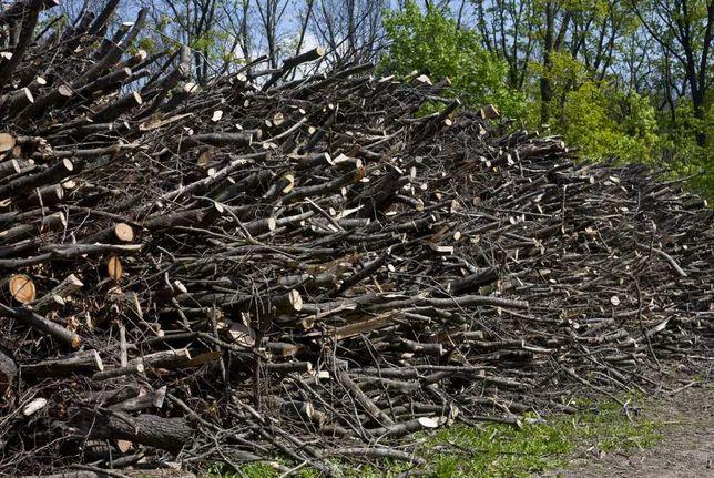 Pilne Oddam gałęzie drewno na opał