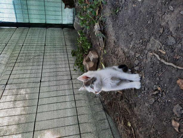 Котята в добрые руки )