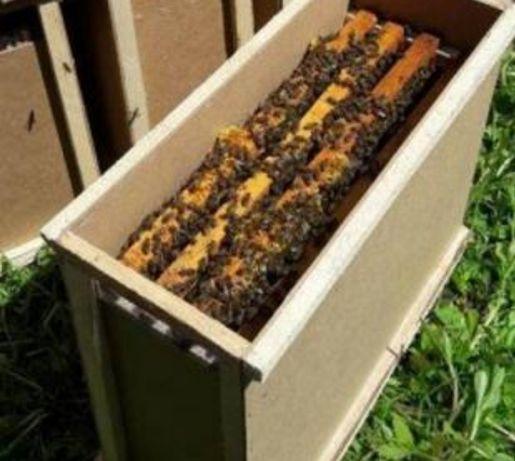 Пчелопакеты заказ