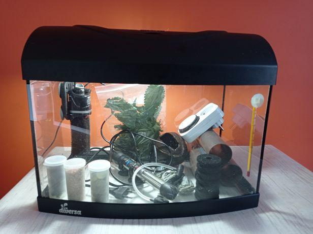 Akwarium panoramiczne z życiem!