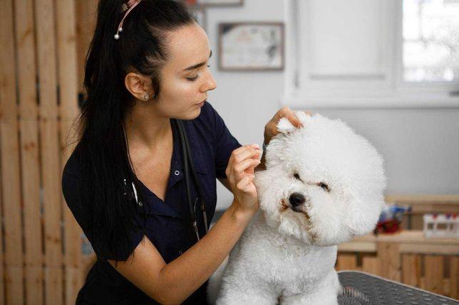 Обучение  курсы груминга грумеров стрижки собак и кошек
