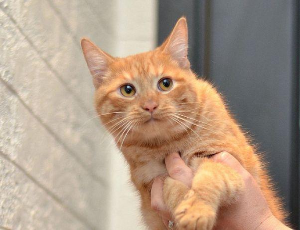 отдам котика, 6 месяцев, ласковый