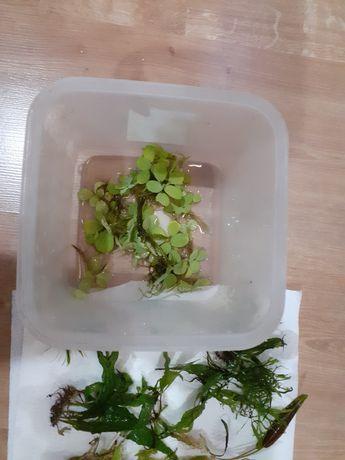 Roślinki zamienię tą rybki