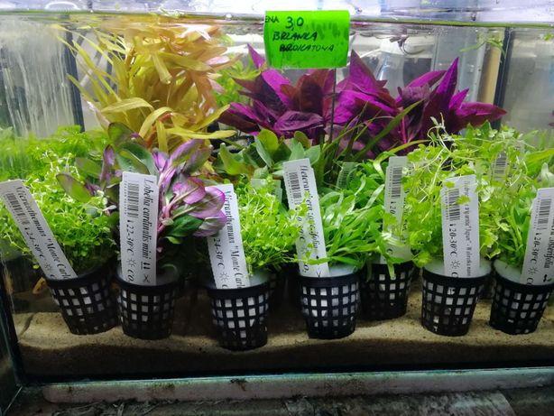 NOWA dostawa roślin do podłoża, na korzeń, do paludarium, hydroponiki