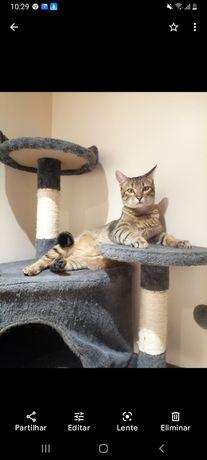 Adoção responsável de gato