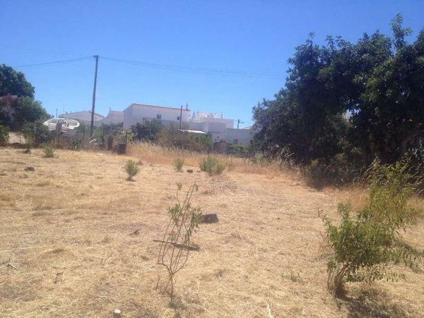 Limpeza de terrenos e Palmeiras