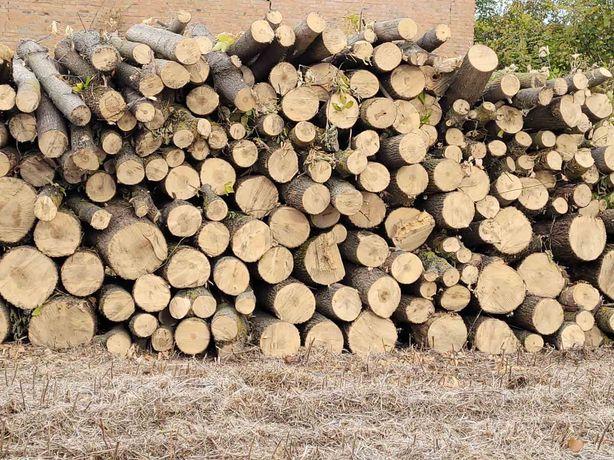 Продам дрова клен