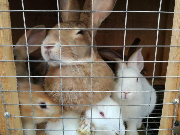 Продам кроликов-нутрий.корм для кроликов
