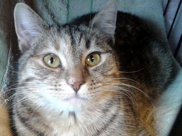 Spragniona miłości, roczna kotka Maja :-)