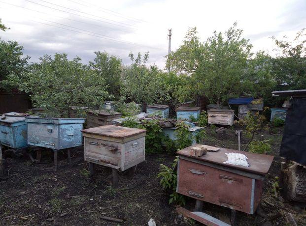 Продам ульи пчелиные