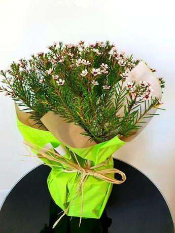 Planta Flor de Cera