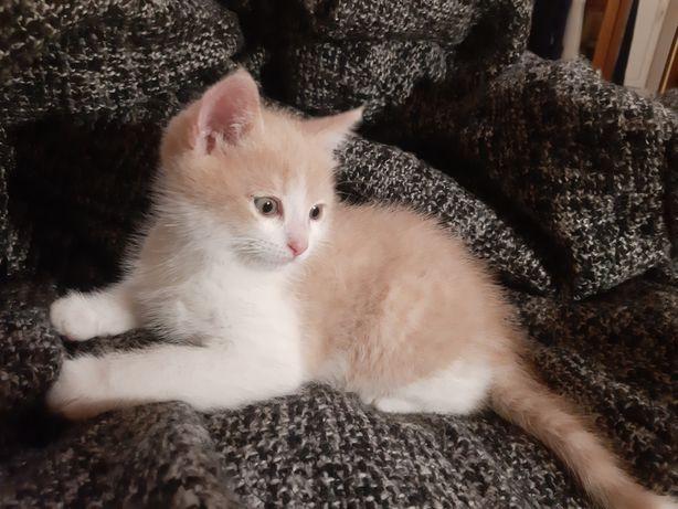 Бесплатно!Пушистый и красивый котёнок!!