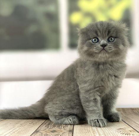 Плюшевая игрушка котенок фолд девочка, котята элитные