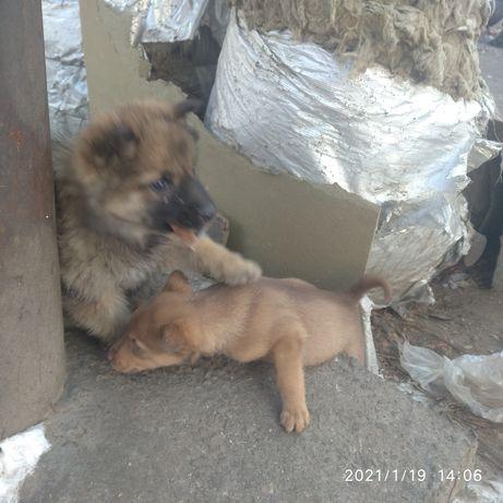 Животныые  очень красивые щенки .