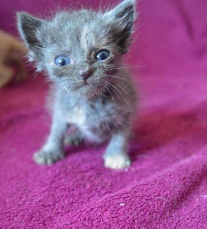 Крошечные котята в добрые руки