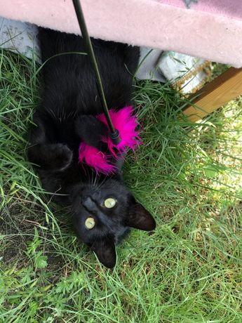 Przepiekna czarna kotka szuka domu