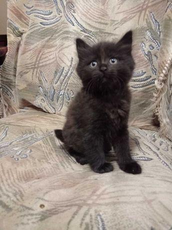 Подарю котёнка бесплатно