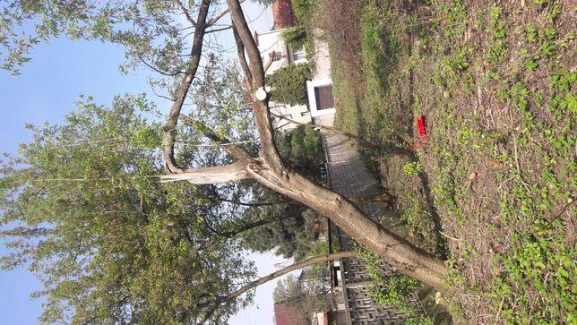 Krzeszowice -Wycinka drzew, rozdrabnianie gałęzi, frezowanie, koszenie