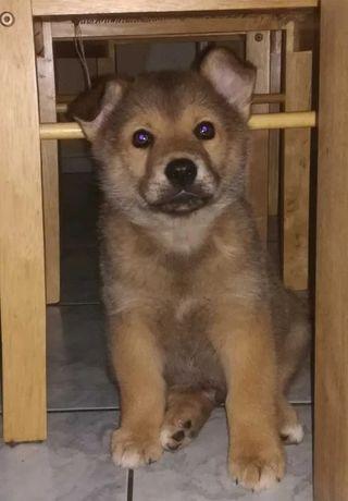 Adopcja! Szczeniak, pies.