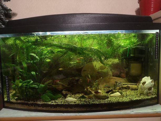 Sprzedam akwarium 112l panoramiczne