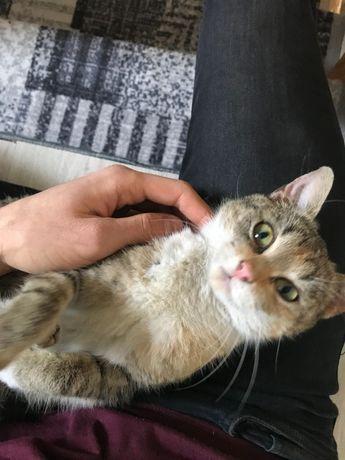 Oddam kota w dobre ręce