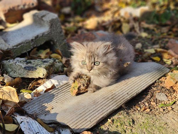 Котята Пушистые котята