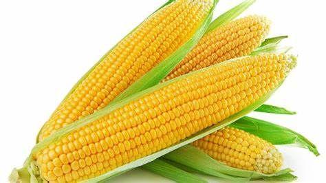 Kukurydza Kosynier Z: 220 K:230 Smolice 50 tysięcy nasion