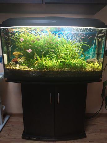Продам аквариум на 250 литров с рыбками