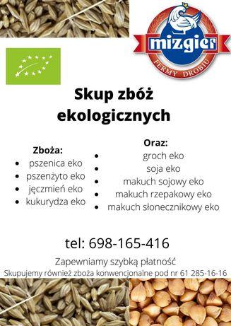 Skup zbóż ekologicznych z certyfikatem