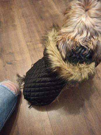 Czarne ubranko dla psa