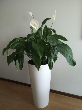 Floreira/Vaso branco brilhante