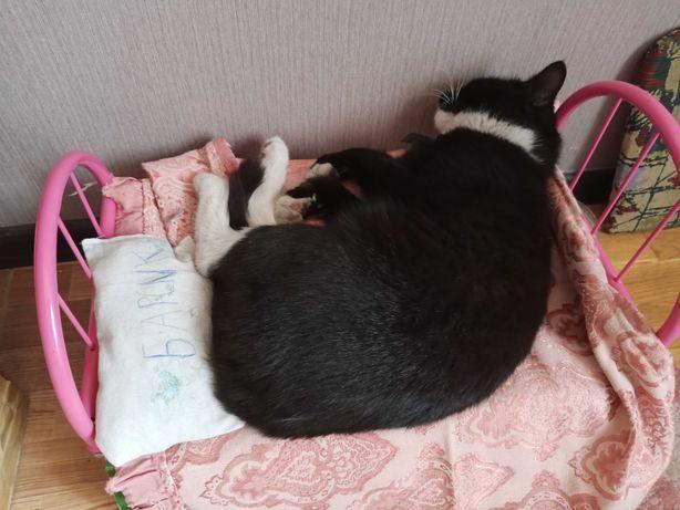 Пропал кот, район Бульвара Шевченко