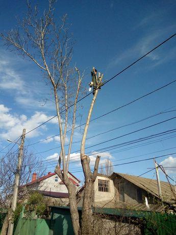 Спил и обрезка деревьев большой опыт, профессионально. Одесса