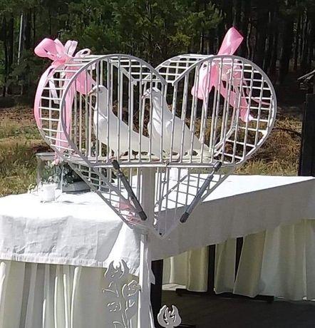 Białe Gołębie na ślub.